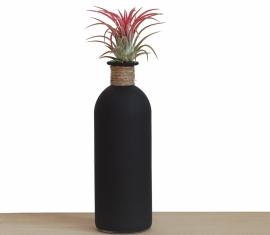 Luchtplantje in zwarte fles | Ionantha Rood