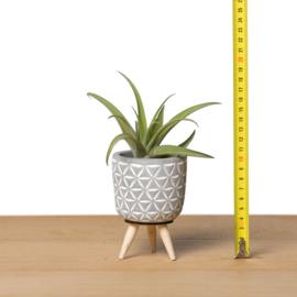 Cementpotje (driehoekjes) met poten & airplant