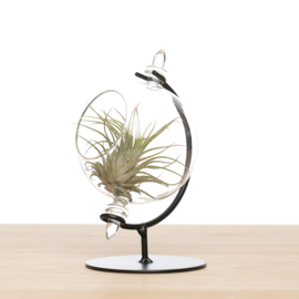 Kleine Globe met airplant