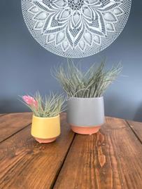 Geel/terra potje klein + airplant