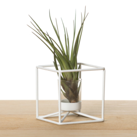 Metalen kubus, wit (met airplant)