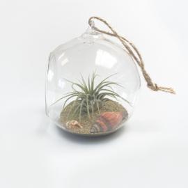 (DIY) Beach ball 10cm + Airplant