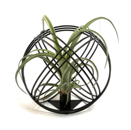 Airplant +  zwart metalen bal