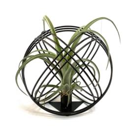 Luftpflanze + schwarze Metallkugel