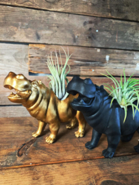 Hippo + airplant (goud)