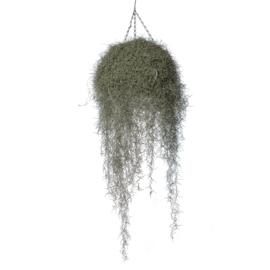 Spanisches Moos HANGER | Spaans mos hanger