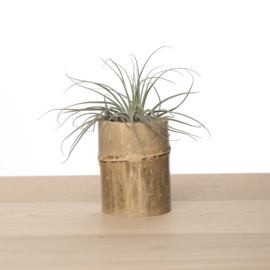 Bamboe airplanthouder incl. tillandsia