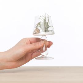 lampGlaasje met airplant
