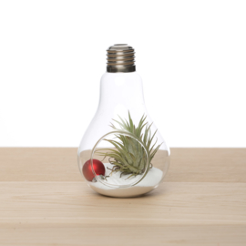 Lightbulb incl. Tillandsia