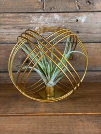 Airplant +  gouden metalen bal