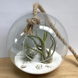 Glazen bol  touw + argentea en caput medusae
