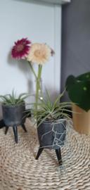 3-poot zwart + Multiflora M