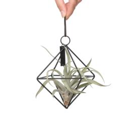 (zwarte) Geometrische hanger + airplant  & spaans mos