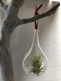 2x glas druppel & 2x glasbol 8cm met lintje en T. Ionantha