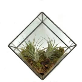 Cubic Terrarium (2x ionantha )