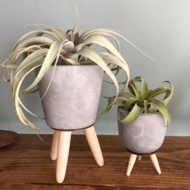 Cementpotje (ruitjes) met poten & airplant