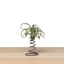 Airplants cadeaus | decoratie