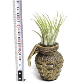 Granaat + tillandsia scaposa (large)