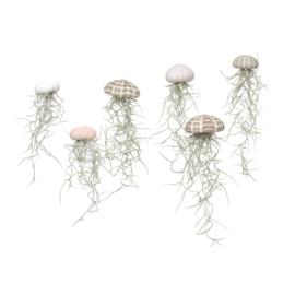 Kleine roze Jellyfish met spaans mos