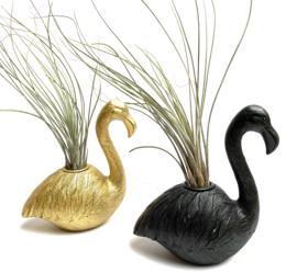 Zwarte Flamingo + Tillandsia Juncea