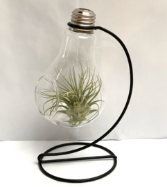 Lightbulb + houder incl. Tillandsia