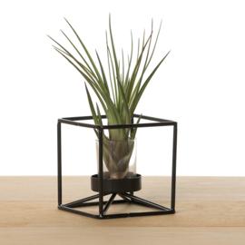 Metalen kubus, zwart (met airplant)