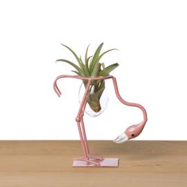 Flamingo + airplant (nek naar beneden)