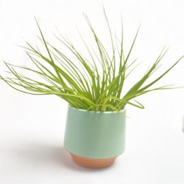 Groot, groen/terra potje + airplant