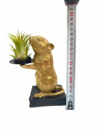 Gouden muis + ionantha rubra (large)