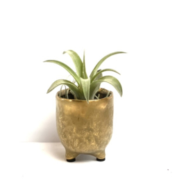potje GOLD + airplant