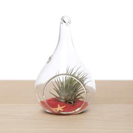 Kleine druppel (glas) incl. luchtplantje