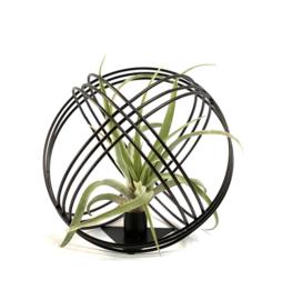 Airplant +  zwart metalen bal