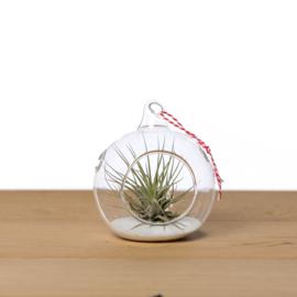 Kerstbal 10cm + Airplant (wit zand)