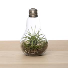 Lightbulb incl. Tillandsia