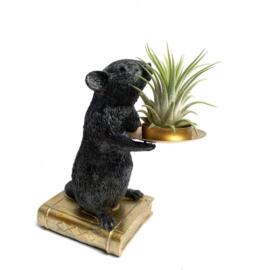 Zwarte muis + ionantha rubra (large)