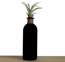 Luchtplantje in zwarte fles | Tillandsia Multiflora medium