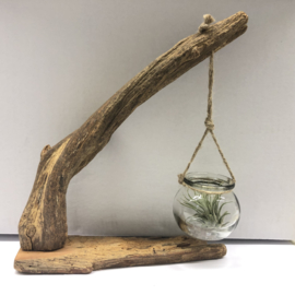Driftwood + hangglaasje & ionantha large