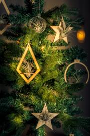 Houten Kerstbal + tillandsia