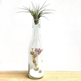 Fles met droogbloemen, ionantha scaposa