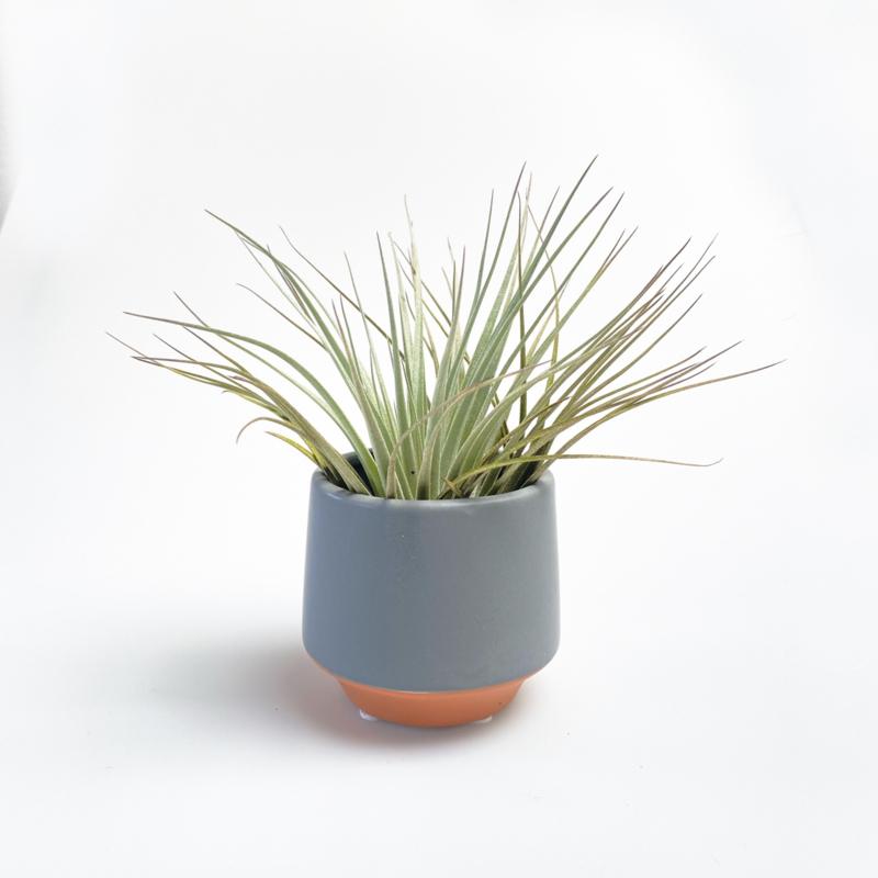 Grijs/terra potje klein + airplant