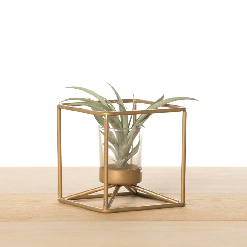 Metalen kubus, goud (met airplant)