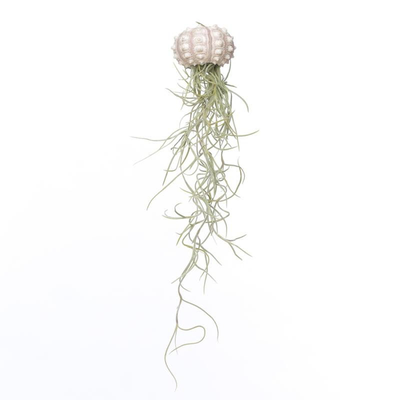 Jellyfish Spoetnik
