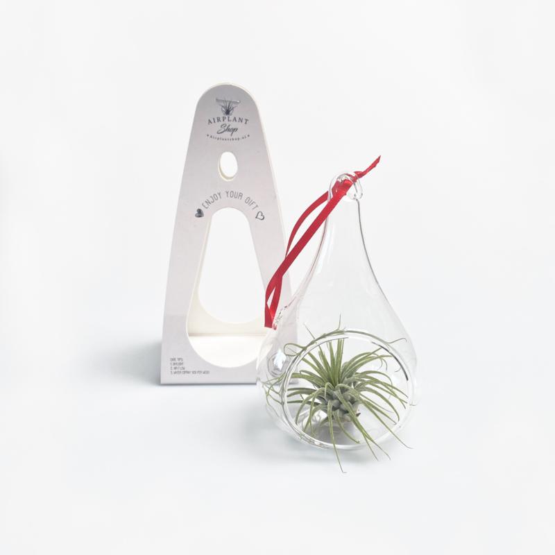 Giftbox  druppel met lintje incl. luchtplantje