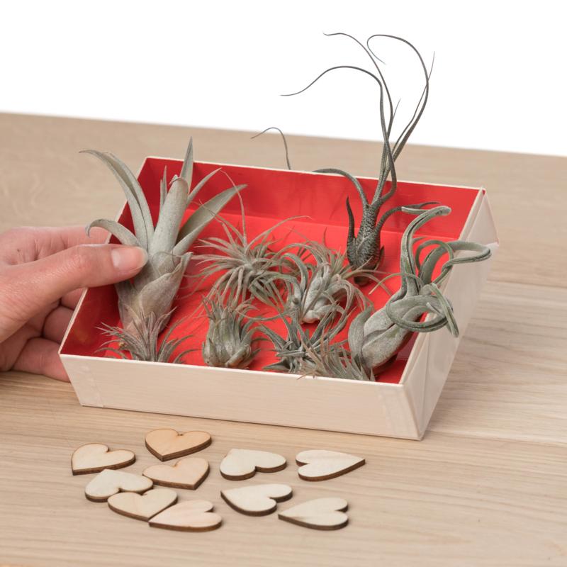 Giftbox (Veel liefs)