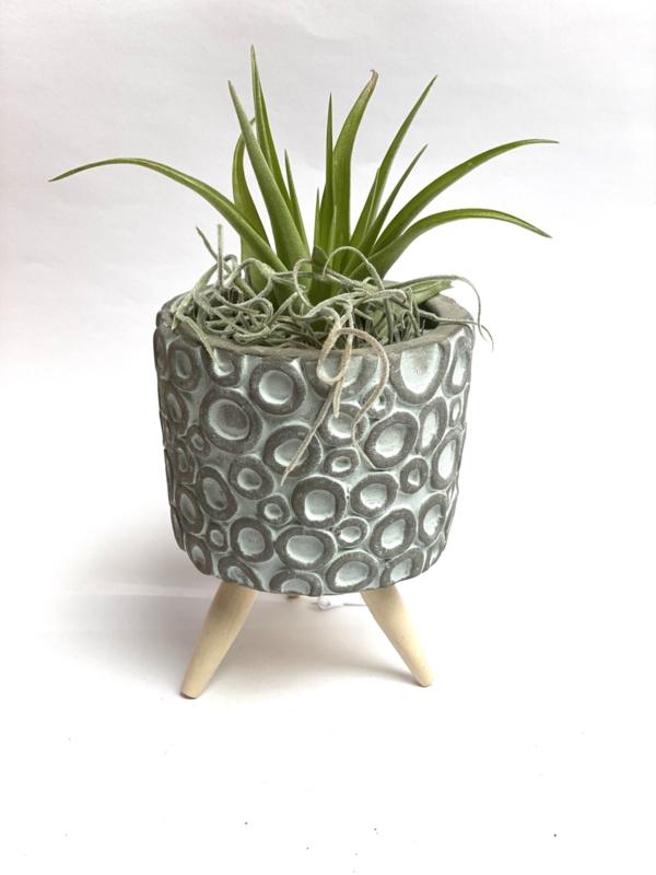 Cementpotje (blauwe rondjes) met poten & airplant