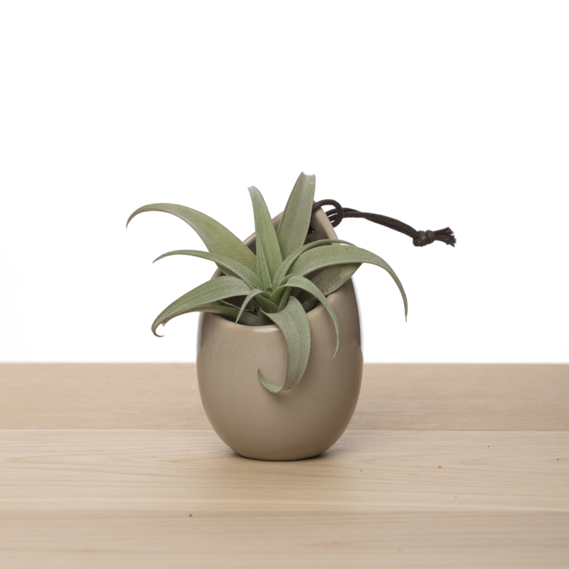 Hangpotje taupe incl. airplant