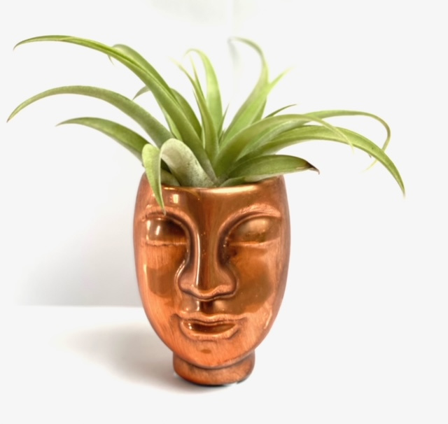 Face KOPER + airplant