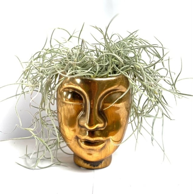 Face GOLD + airplant