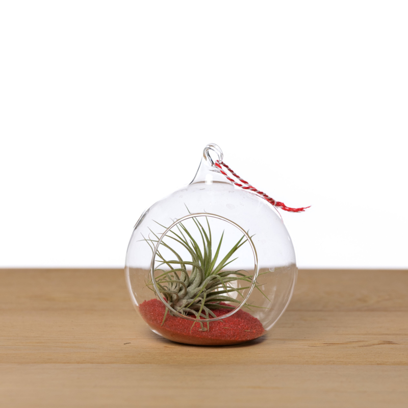 Kerstbal 10cm + Airplant (rood zand)