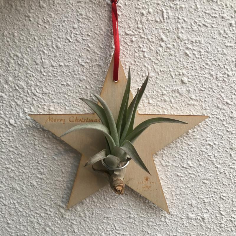 Houten Kerst ster met Tillandsia multiflora